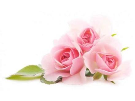 Ароматизатор Чайная роза №22